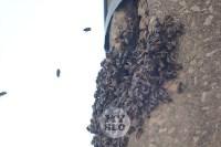 В Туле в фонарном столбе поселились пчелы, Фото: 3