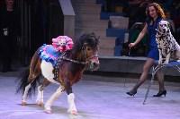 Цирковое шоу, Фото: 64