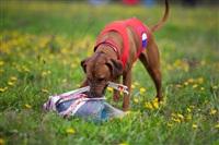 В Туле состоялись собачьи бега, Фото: 25