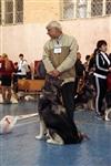 В Туле прошла всероссийская выставка собак, Фото: 1