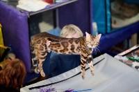 Выставка кошек. 4 и 5 апреля 2015 года в ГКЗ., Фото: 73