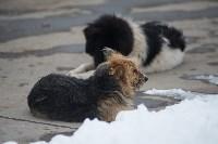 Крематорий для собак в Венёве, 24.03.2016, Фото: 50