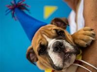 Собачий карнавал, Фото: 8