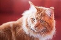 Международная выставка кошек. 16-17 апреля 2016 года, Фото: 101