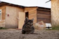 В тульском селе сносят незаконные цыганские постройки, Фото: 24