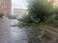 Дерево упало на авто, Фото: 1