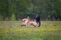 В Туле состоялись собачьи бега, Фото: 3