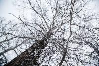 Темная сторона Платоновского парка, Фото: 5