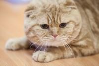 В Туле прошла выставка «Пряничные кошки» , Фото: 107