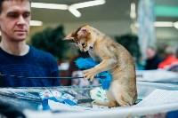 """Выставка """"Пряничные кошки"""" в ТРЦ """"Макси"""", Фото: 67"""