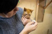 Волонтеры спасли кошек из адской квартиры, Фото: 73