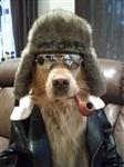 Собачья мода, Фото: 6