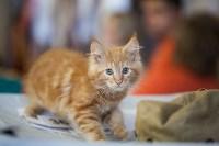 В Туле прошла выставка «Пряничные кошки» , Фото: 38