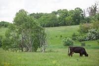 Коровы, свиньи и горы навоза в деревне Кукуй: Роспотреб требует запрета деятельности токсичной фермы, Фото: 6