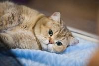 В Туле прошла выставка «Пряничные кошки» , Фото: 15