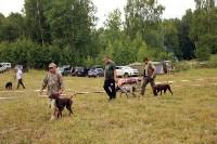 Выставка охотничьих собак под Тулой, Фото: 85