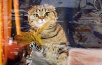 Выставка кошек. 4 и 5 апреля 2015 года в ГКЗ., Фото: 61