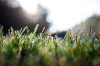 Центральный парк, утро, осень, Фото: 38