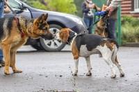 Международная выставка собак, Барсучок. 5.09.2015, Фото: 12
