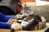 Выставка кошек. 4 и 5 апреля 2015 года в ГКЗ., Фото: 24