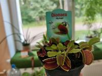 Укротитель хищных растений Сергей Куницын, Фото: 21