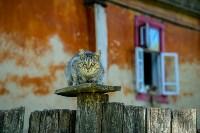 Фестиваль крапивы: пятьдесят оттенков лета!, Фото: 1