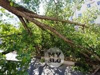 Упавшее дерево перекрыло ул. Болдина, Фото: 5