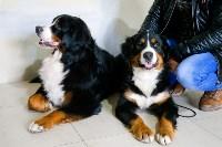 Выставка собак в Туле, Фото: 18