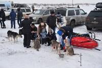 Праздник северных собак на Куликовом поле , Фото: 3