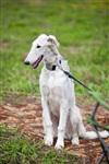 В Туле состоялись собачьи бега, Фото: 57
