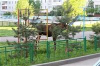 Лось во дворе дома №45 по ул. Плеханова, Фото: 26