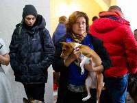 Выставка собак в Туле, Фото: 3