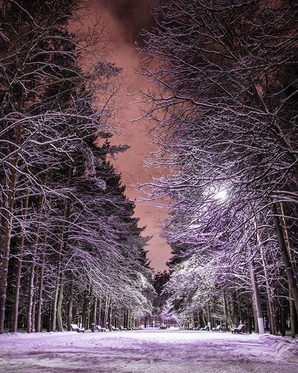 Аллеи Белоусовского парка