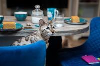 Экзотические животные в квартире, Фото: 23