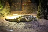 Тульский экзотариум: животные, Фото: 59