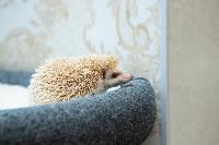Экзотические животные в квартире, Фото: 14