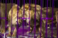 Шоу фонтанов «13 месяцев» в Тульском цирке – подарите себе и близким путевку в сказку!, Фото: 73