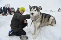 Праздник северных собак на Куликовом поле , Фото: 52