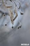 Зимняя сказка Платновского парка, Фото: 22