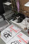В Туле прошла международная выставка кошек, Фото: 73