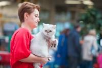 Выставка кошек в МАКСИ, Фото: 24