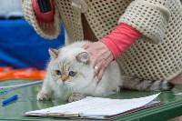Выставка кошек в Туле, Фото: 44