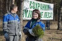 посадка леса в Одоевском лесничестве, Фото: 8