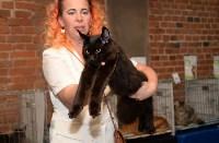 Выставка кошек в Искре, Фото: 44