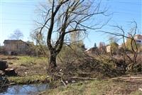 Спиленные деревья в ручье березовой рощи, Фото: 12