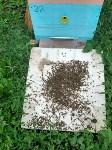 Гибель пчел в Щекинском районе, Фото: 6