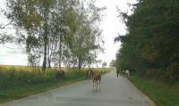 Табун лошадей у Сеженского леса, Фото: 4