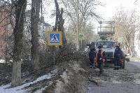 Кронирование деревьев в Туле: что можно, а чего нельзя?, Фото: 5