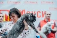 """Выставка """"Пряничные кошки"""" в ТРЦ """"Макси"""", Фото: 43"""