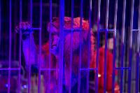 Шоу фонтанов «13 месяцев» в Тульском цирке – подарите себе и близким путевку в сказку!, Фото: 81